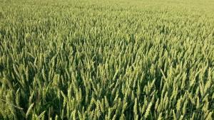 come calcolare valore terreno agricolo